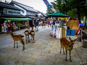 Nara_[Aug2015]_0448